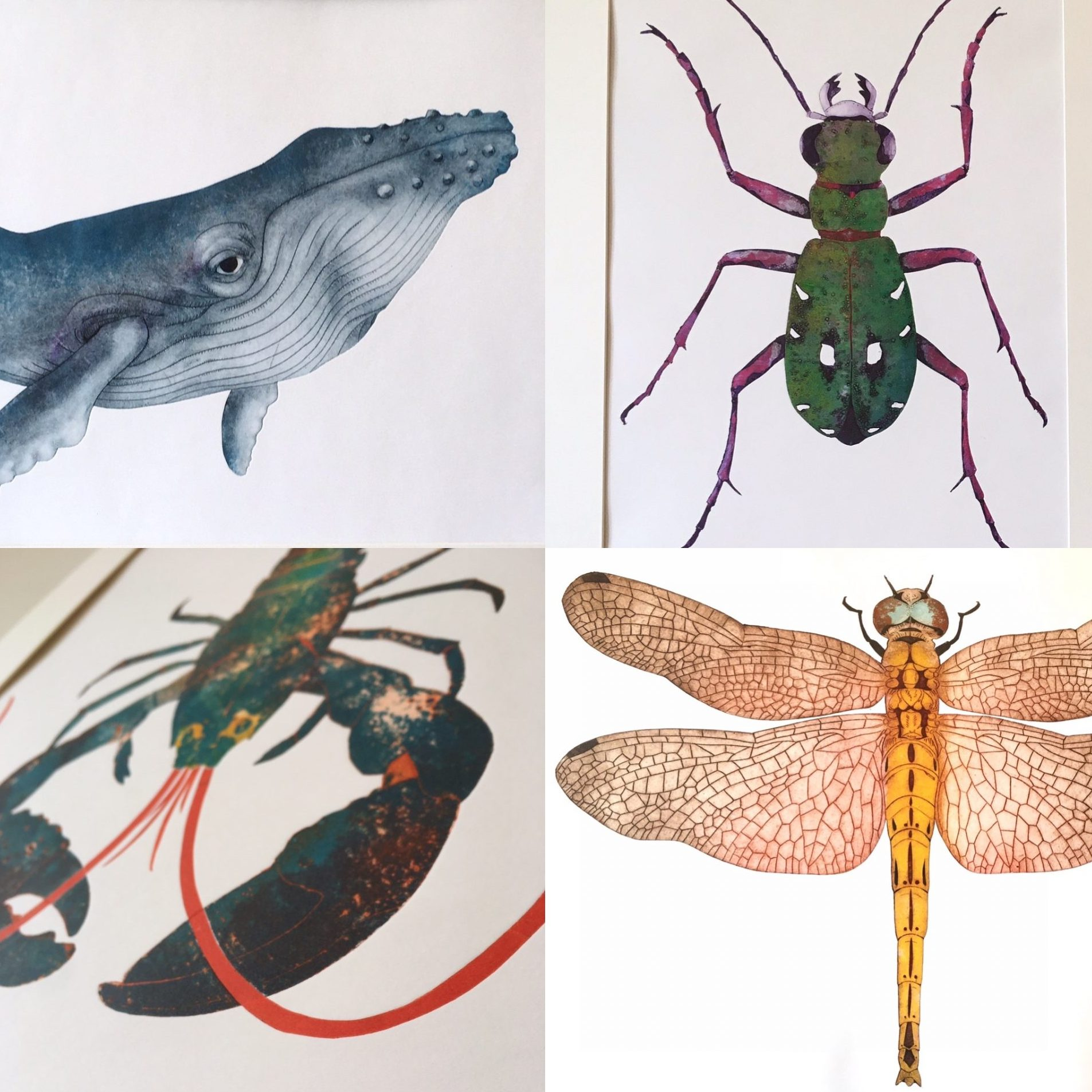 Steph Renshaw Creatures Print